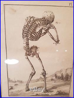 3 Gravures XVIII Eme. Squelette. Cabinet De Curiosites. Engraving Skeleton 1772