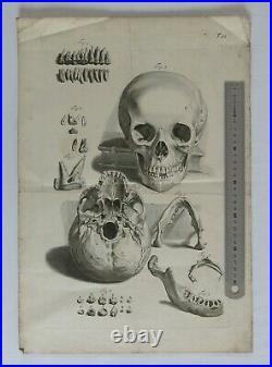 CRANE, machoire, dents, vanité, squelette, Gamelin curiosité, gravure ancienne