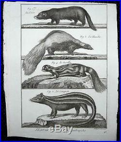 Enorme lot de 43 Gravures 1782 Daubenton Buffon Histoire Naturelle des Animaux