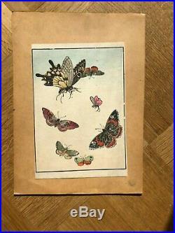Estampe Japonaise Ancienne Fleurs, Animal, Papillon c. 1890