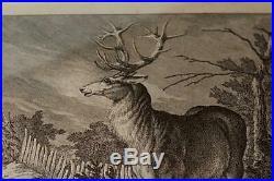 Gravure au burin Cerf et empreintes de Johann Elias Ridinger XVIIIe Siècle