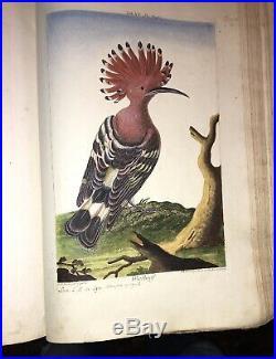 OISEAUX. CENT CINQUANTE SIX PLANCHES D'OISEAUX du XVIIIéme, 25 x 40 cm