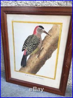 Ornithologie OISEAU lot 4 anciennes gravure rehaussée MARTINET François Nicolas